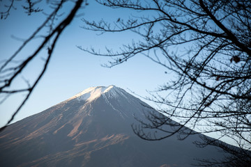 Mount Fuji through branches of trees