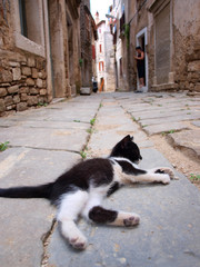lazy cat lying on street