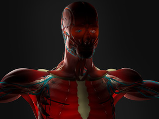 Human anatomy 3D futuristic technology scan.Intestines. Shoulders and head. Back-lit.