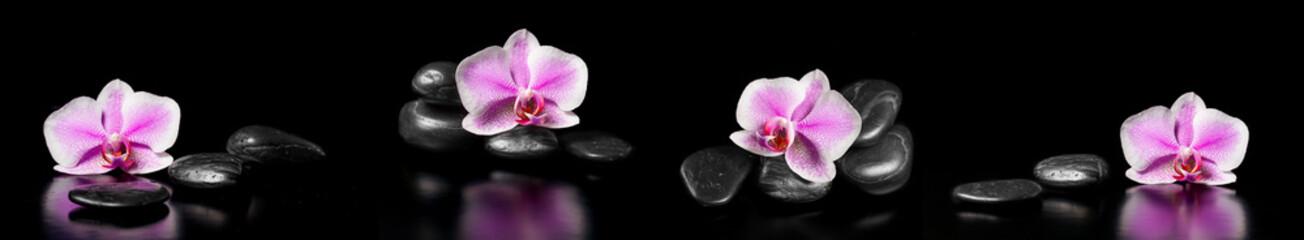 Horyzontalna panorama z różowymi orchideami i zen kamieniami na czarnym tle