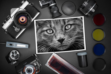 Analog SLR camera equipment around a printed photo of a tabby cat