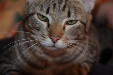 March cat, wool, ravenous beast, cat