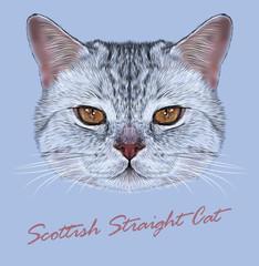 Vector Illustrative Portrait of Scottish Straight Cat