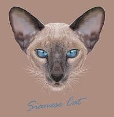 Vector Illustrative Portrait of a Siamese cat
