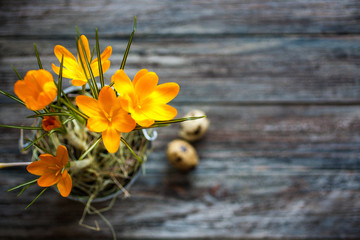 Spring flowers and quail eggs on the old wooden background with copyspace from the right. Retro vintage style. Soft focus