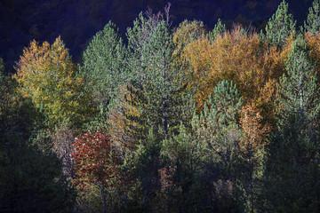 Mille alberi, mille colori