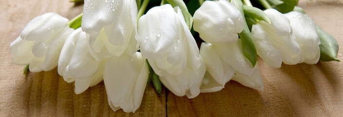White tulip bouquet  isolated .