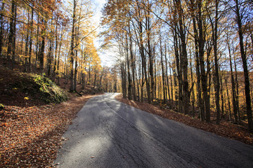Strada nel bosco all'alba