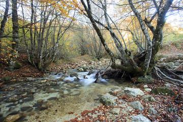 Piccolo fiume che scorre nel bosco colorato