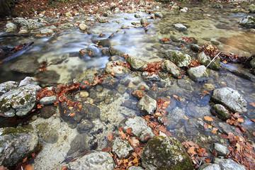 Fiume con rocce colorate dalle foglie