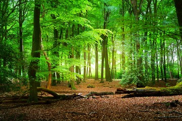 Canvas Prints Green Walkway in a spring forest in the Netherlands