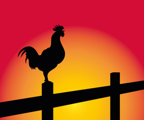 crowing rooster on the background of sunrise