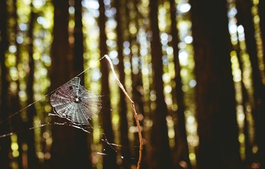 Cobweb on a branch