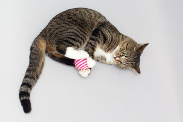Tabby cat plays with ball