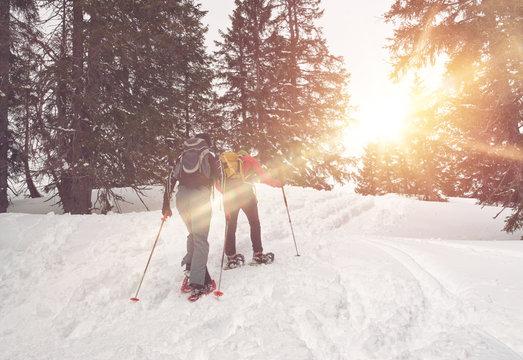 Sunlight through trees around snowshoe trekkers