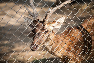 Deer in cage