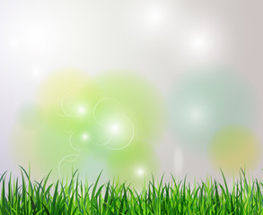 Green grass spring background