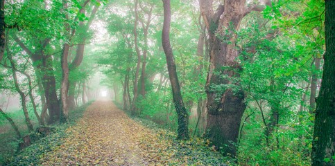 Photo Stands Road in forest Fairytale forrest