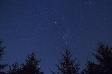 Starry night sky background - looking up at space over silhouetted trees in the forest
