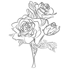Vector Sketch black and white rose