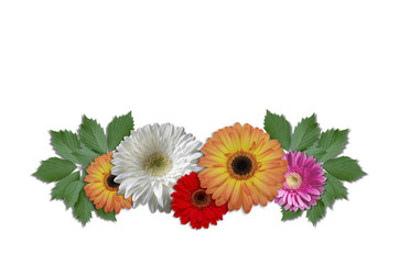 Group flowers daisies with green ivy leaves on a white background