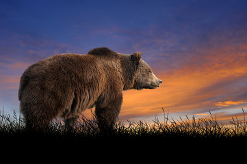 Bear on the background of sunset sky Wall mural
