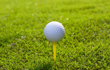 Golf ball on tee in grass background