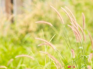 Field grass background blur.