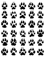 Black print of dogs paws on white background, vector