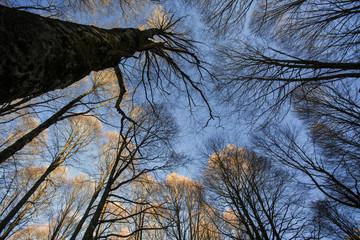 Il bosco visto dal basso