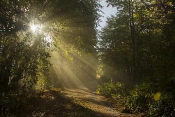 poranek w lesie w drodze na Ślęzę