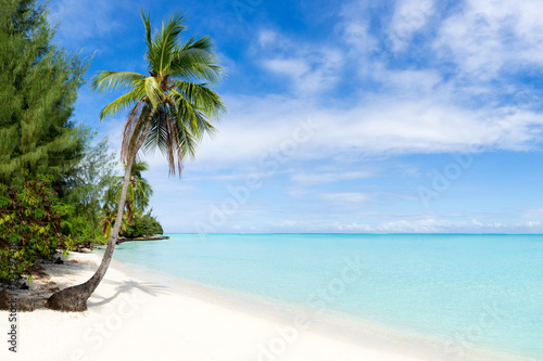 Palmenstrand Und Meer In Der Karibik Stockfotos Und Lizenzfreie