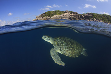 Sea Turtle half and half split photo sea surface underwater and island,