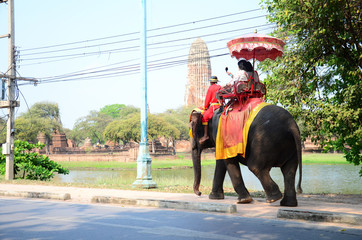 Traveler riding elephant for tour around Ayutthaya ancient city