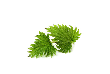 Two leaves of a nettle.