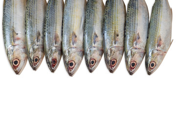Group of  Fish isolated on white background