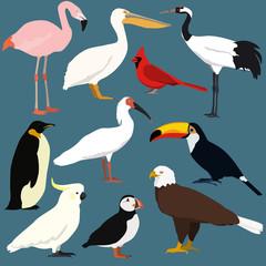 Cartoon birds collection. Different species of birds vector set.