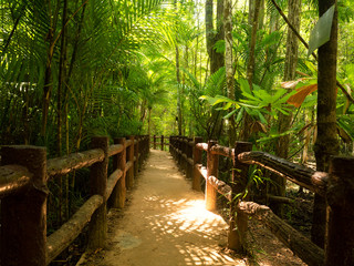 Wooden footpath in misty tropical rain forest of Thailand