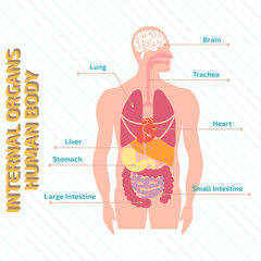 Medical infographic human body