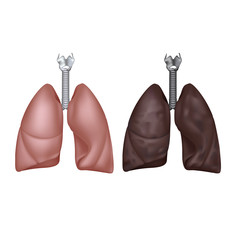 Normal ad smoker lungs