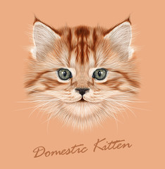 Vector Illustrative Portrait of Domestic Kitten.