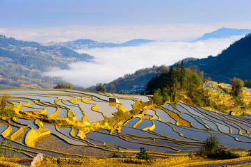 Rice Terraced field in water season in YuanYang, China