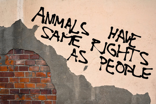 Handwritten graffiti Animals Have Same Rights As People sprayed on the wall, anarchist aesthetics
