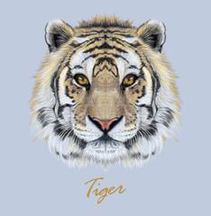 Vector Illustrative Portrait of a Tiger on blue background