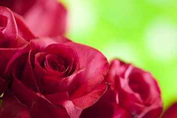 Red roses on nature green background
