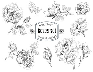 Hand drawn ink rose flowers set in sketch stile. Vector illustration