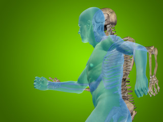 Conceptual Anatomy human body on green