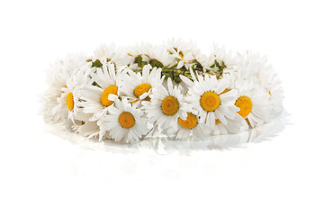 daisy wreath on a white background