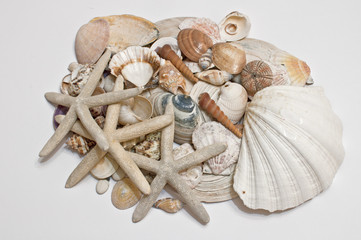 Decoration, starfish and shell / the composition consists a starfish, an echinus and a shell