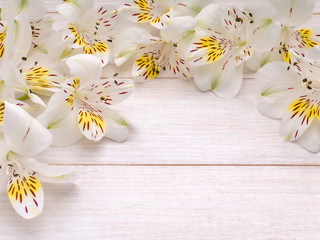 White and yellow alstroemeria flowers